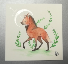 Maned Wolf. Watercolor 20x20cm. 35€ + shipping